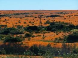 Tour and Travel Guide of Namaqua National Park