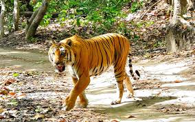 Jim Corbett National Park- The oldest National Park of India