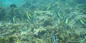 Underwater Sea Walk Tickets, Price, Timings, Location